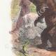 DÉTAILS 02   Fables de La Fontaine - Les Compagnons d'Ulysse