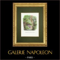 Fables of La Fontaine - Le Songe d'un Habitant du Mogol