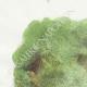 DÉTAILS 01 | Fables de La Fontaine - Le Songe d'un Habitant du Mogol