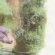 DÉTAILS 04 | Fables de La Fontaine - Le Songe d'un Habitant du Mogol