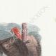 DÉTAILS 04 | Fables de La Fontaine - Le Renard et les Poulets d'Inde