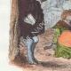 DÉTAILS 02   Fables de La Fontaine - Le Singe