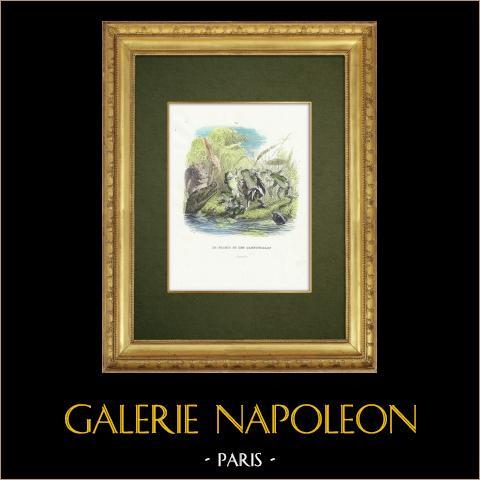Favole di La Fontaine - Le Soleil et les Grenouilles | Incisione xilografica originale disegnata da J.J. Grandville. Acquerellata a mano. 1859