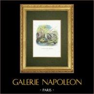 Fabler av La Fontaine - Le Soleil et les Grenouilles