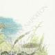 DÉTAILS 03   Fables de La Fontaine - Le Soleil et les Grenouilles