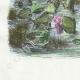 DÉTAILS 02 | Fables de La Fontaine - Le Soleil et les Grenouilles