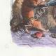 DÉTAILS 02 | Fables de La Fontaine - La Querelle des Chiens et des Chats et celle des Chats et des Souris