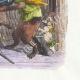 DÉTAILS 04 | Fables de La Fontaine - La Querelle des Chiens et des Chats et celle des Chats et des Souris