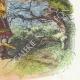 DÉTAILS 04 | Fables de La Fontaine - La Chauve Souris, le Buisson et le Canard