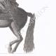 DÉTAILS 04 | Statue Equestre de Louis XIV (1638-1715)