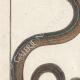 DÉTAILS 02   Serpents - Ibibe - Hébraïque
