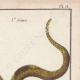 DÉTAILS 03   Serpents - Ibibe - Hébraïque