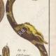 DÉTAILS 04   Serpents - Ibibe - Hébraïque