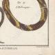 DÉTAILS 06   Serpents - Ibibe - Hébraïque