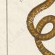 DÉTAILS 02   Serpents - Rouleau - Acrochorde de Java