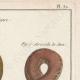DÉTAILS 03   Serpents - Rouleau - Acrochorde de Java