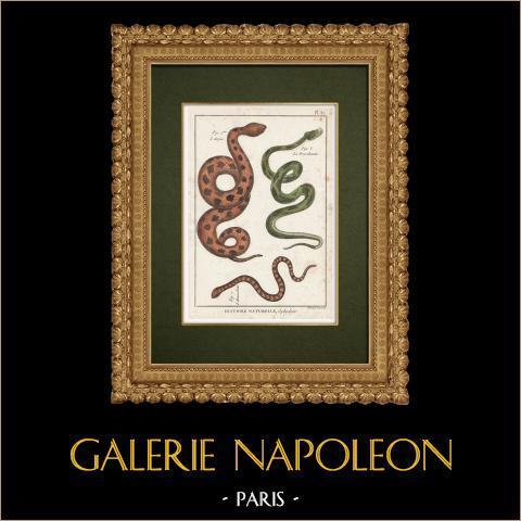 Serpents - Aspic - Brasilienne - Hemachate | Gravure sur cuivre originale. Benard direxit. Aquarellée à la main et réhaussée à la gomme arabique. 1789