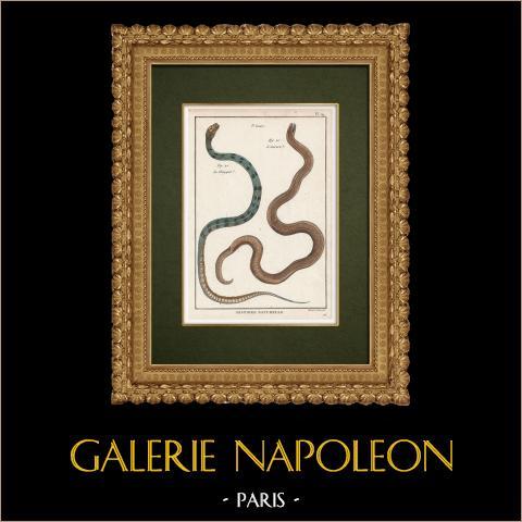 Serpents - Chayque - Aurore | Gravure sur cuivre originale. Benard direxit. Aquarellée à la main et réhaussée à la gomme arabique. 1789