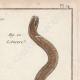 DÉTAILS 03 | Serpents - Chayque - Aurore