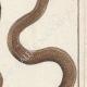 DÉTAILS 04 | Serpents - Chayque - Aurore