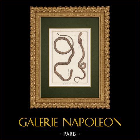 Serpents - Rayé - Serpent à Lunettes | Gravure sur cuivre originale. Benard direxit. Aquarellée à la main et réhaussée à la gomme arabique. 1789