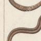 DÉTAILS 02 | Serpents - Rayé - Serpent à Lunettes