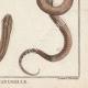 DÉTAILS 06 | Serpents - Rayé - Serpent à Lunettes