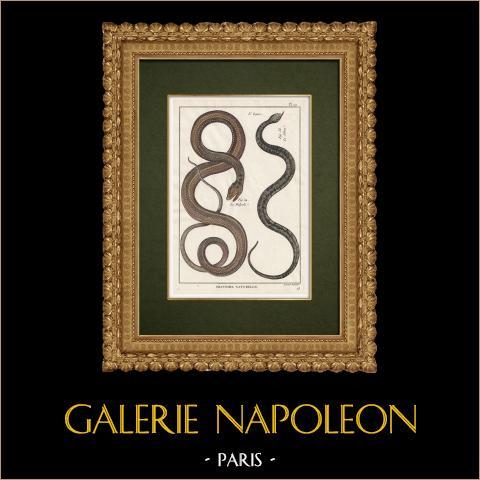 Serpents - Malpole - Sibon | Gravure sur cuivre originale. Benard direxit. Aquarellée à la main et réhaussée à la gomme arabique. 1789
