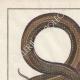 DÉTAILS 01   Serpents - Malpole - Sibon