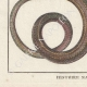 DÉTAILS 05   Serpents - Malpole - Sibon