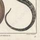 DÉTAILS 06   Serpents - Malpole - Sibon