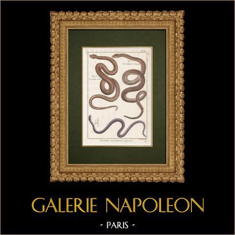 Serpents - Quatre-raies - Couleuvre d'Esculape - Violette | Gravure sur cuivre originale. Benard direxit. Aquarellée à la main et réhaussée à la gomme arabique. 1789