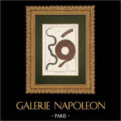 Serpents - Grison - Serpentà Chaîne | Gravure sur cuivre originale. Benard direxit. Aquarellée à la main et réhaussée à la gomme arabique. 1789