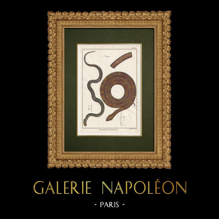 Gravures Anciennes & Dessins   Serpents - Grison - Serpentà Chaîne   Gravure sur cuivre   1789