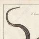 DÉTAILS 01   Serpents - Grison - Serpentà Chaîne