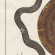 DÉTAILS 02   Serpents - Grison - Serpentà Chaîne