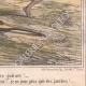 DÉTAILS 06 | Caricature de la Guerre d'Indépendance Italienne - 1859  -  Lazzarone ! vous oubliez votre guitare ! Je n'en ai plus besoin voici les siciliens !
