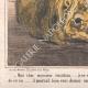 DETAILS 03   Caricature - Great Britain - 1862 - American Civil War - Shortage of cotton