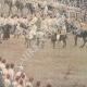 DETAILS 06 | Italo-Ethiopian War - The winners of Senafé return to Massaoua - 1895