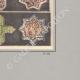 DETAILS 06 | Oriental ceramics - Stars - Faience - Persia - XIII and XIV century