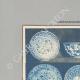DETAILS 01 | Oriental ceramics - Dishes - Asia Minor - XVIth Century
