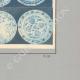 DETAILS 06 | Oriental ceramics - Dishes - Asia Minor - XVIth Century