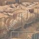DÉTAILS 02 | Vieillards asphyxiés dans un hospice de Noisy-le-Sec - Ile de France - 1901
