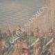 DETAILS 03 | Attack against the German Emperor Wilhelm II at Bremen - Germany - 1901