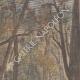 DETAILS 03 | A logger killed by a wild boar - Villers-les-Pots - France - 1901