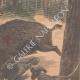 DETAILS 04 | A logger killed by a wild boar - Villers-les-Pots - France - 1901