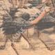 DÉTAILS 02 | Des autruches attaquent une automobile en Californie - États-Unis d'Amérique - 1904