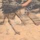 DÉTAILS 05 | Des autruches attaquent une automobile en Californie - États-Unis d'Amérique - 1904