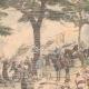 DÉTAILS 03 | Incendies dans les forêts d'Algérie - Afrique du Nord - 1904