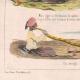 DÉTAILS 05 | Caricature - Algérie - Moeurs Algériennes - Mon tigre à le spleen